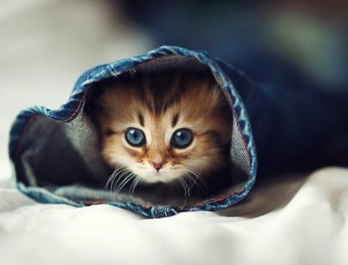 Дом для котенка