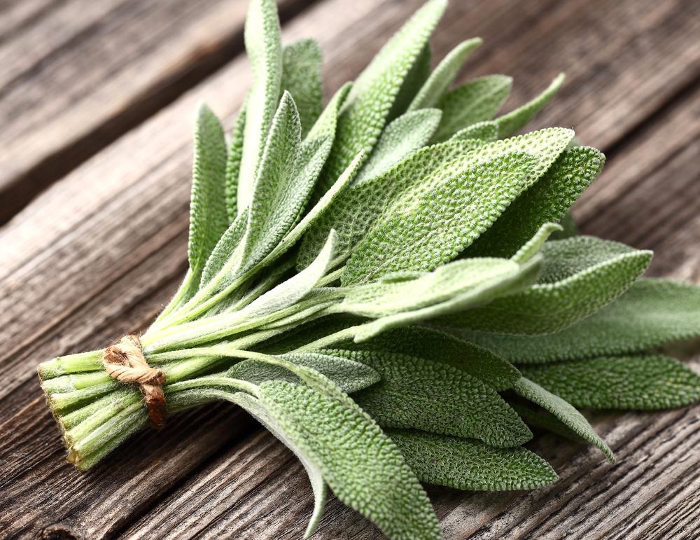 20 лайфхакерских растений для укрепления здоровья
