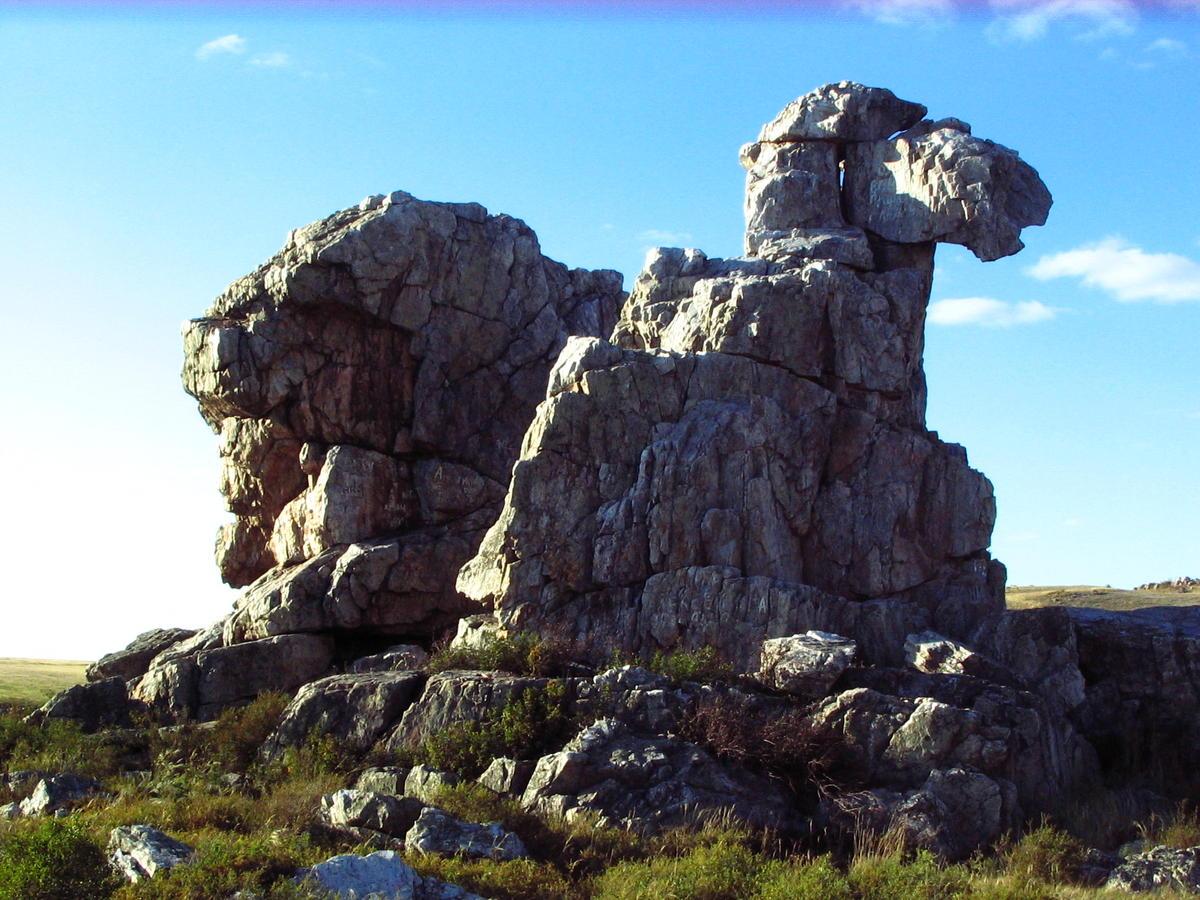 Верблюд гора оренбургская область фото
