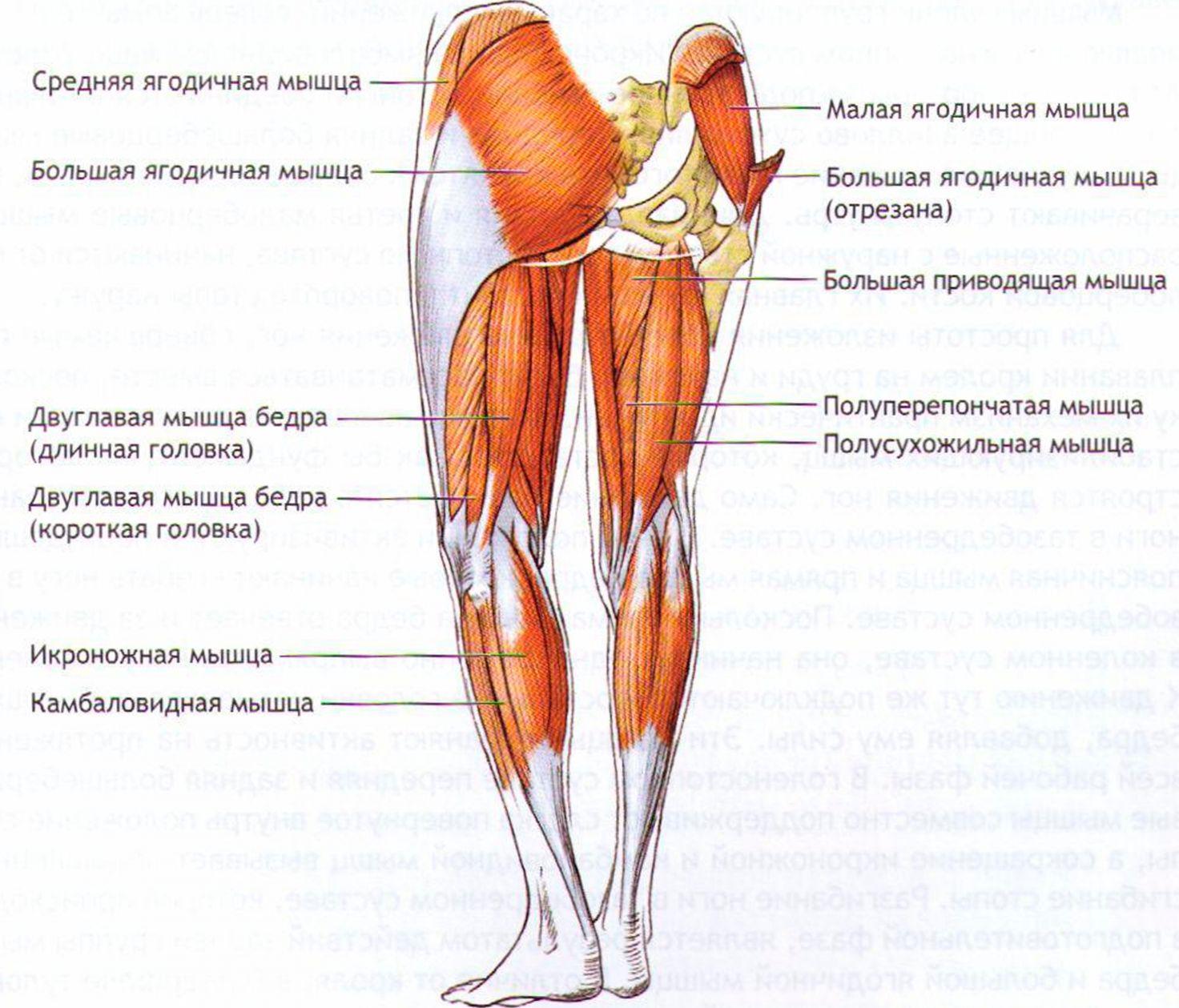 Схемы лечения растяжения мышц