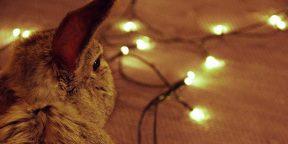 Новогодние игрушки: маленькие кролики