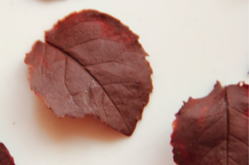 chocolate leaves9