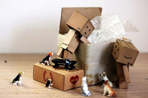 коробка, переезд, как организовать, как избежать лишнего стресса