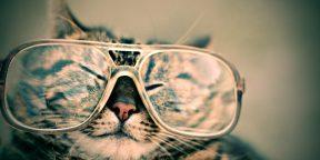 Как перевезти кота. Советы для путешествия с домашними животными