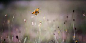 Как красиво сфотографировать бабочку: 8 советов