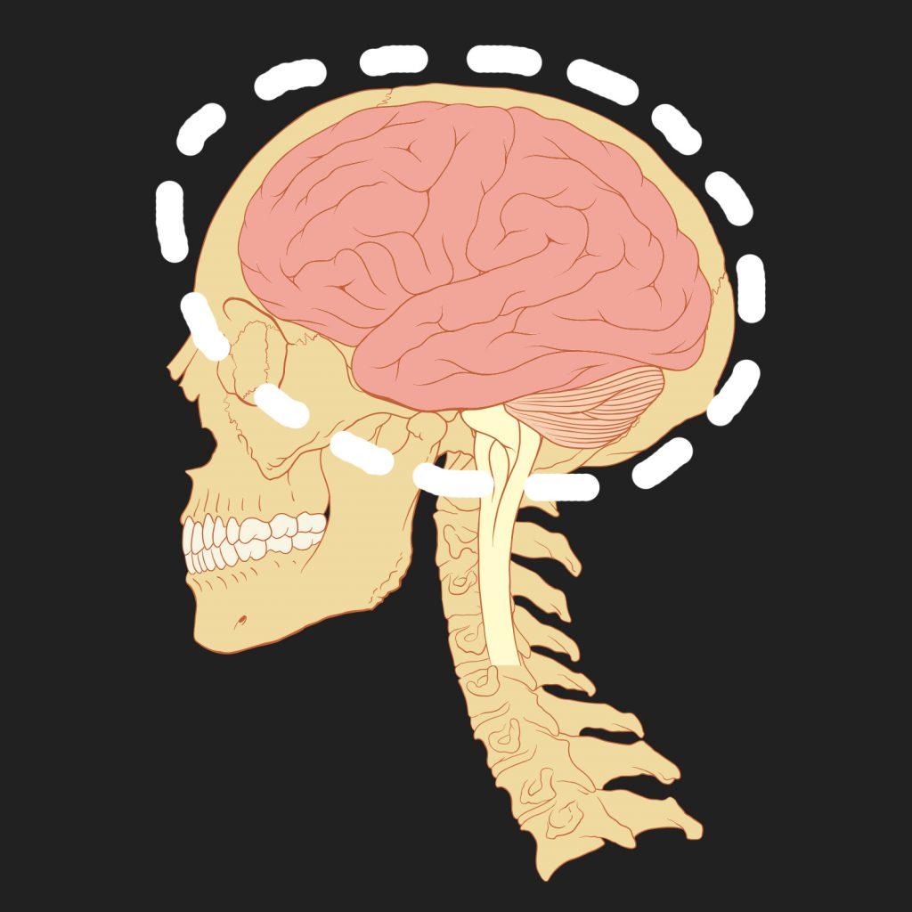 Картинка маленький мозг в голове
