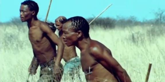 ВИДЕО: Как бегуны-охотники в Африке охотятся за антилопами куду