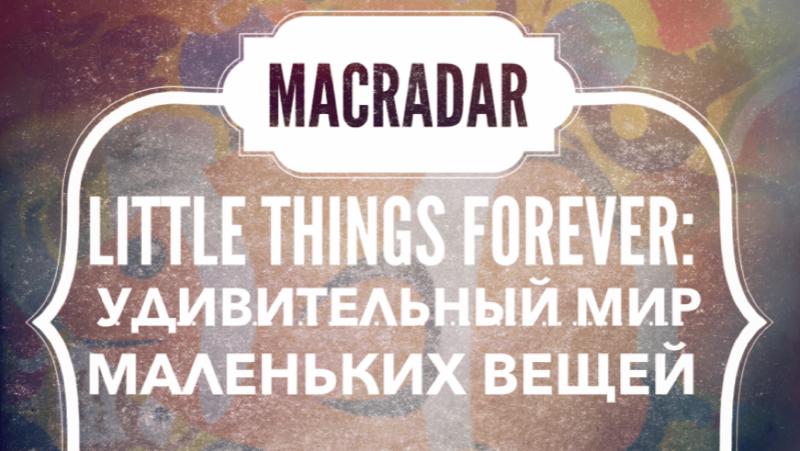 Little Things Forever: удивительный мир маленьких вещей