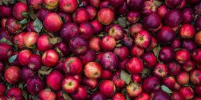 Почему надо есть яблоки
