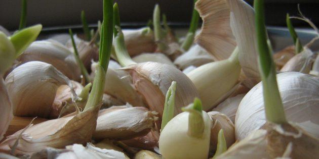 Как вырастить дома чеснок
