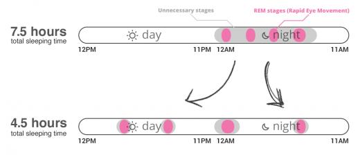 Фазы быстрого и медленного сна при обычном и полифазном циклах