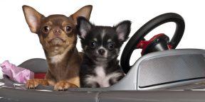 3 лайфхака для тех, у кого одна машина в семье