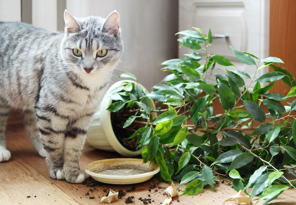 Комнатные растения прикольные картинки, для телефона 320х240