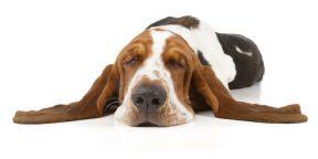 Йога для начинающих: упражнение, которое поможет расслабиться перед сном