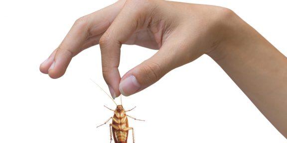 Как выгнать тараканов из головы? 4 простых шага!