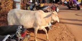Почему для путешествия Индия — идеальная страна