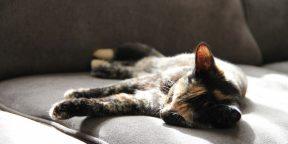 Почему много спать – тоже вредно. Версия Гарварда