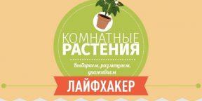 ИНФОГРАФИКА: Комнатные растения.  Выбираем, размещаем, ухаживаем
