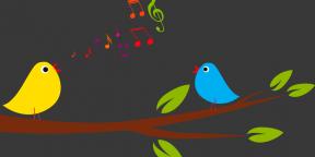 О пользе фонового шума, или Как работать под пение птиц