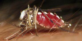 Как сделать так, чтобы комары не кусали