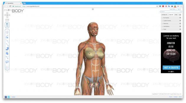 Сервис Google Body
