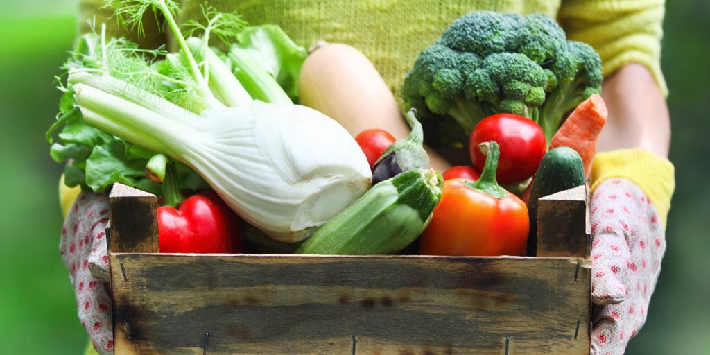 Правильное питание: лучшие статьи о том, что и как надо есть
