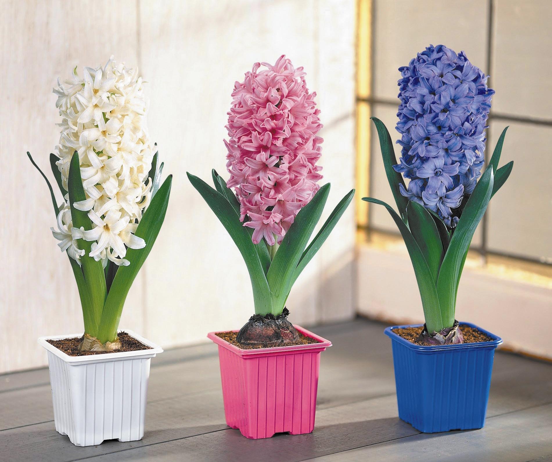Рекламные ролики подарки и живые цветы цветы для букета невесты фото с названиями