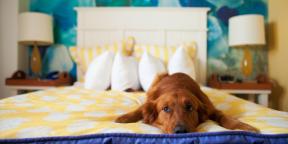 Правильно ли брать домашних любимцев спать в свою кровать