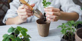 Огород на подоконнике: как вырастить овощи, зелень и даже клубнику у себя дома