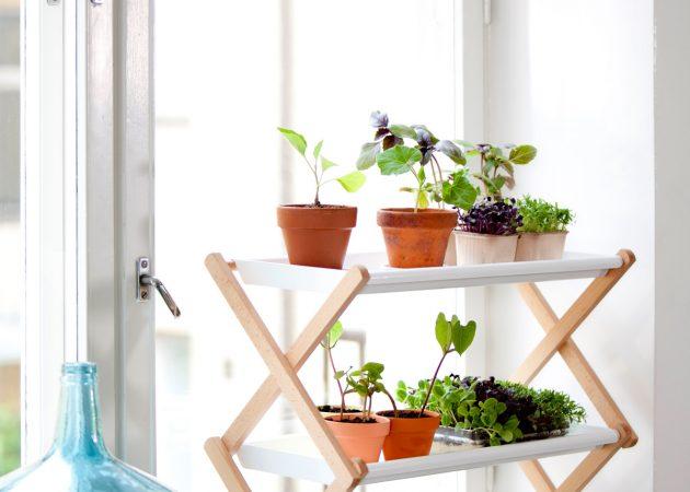 Что можно вырастить дома