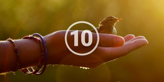 10 правил, которые должен помнить каждый экотурист