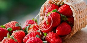 Как сохранить клубнику свежей