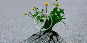 7 историй о том, как неудачи и жизненные катастрофы помогают найти призвание