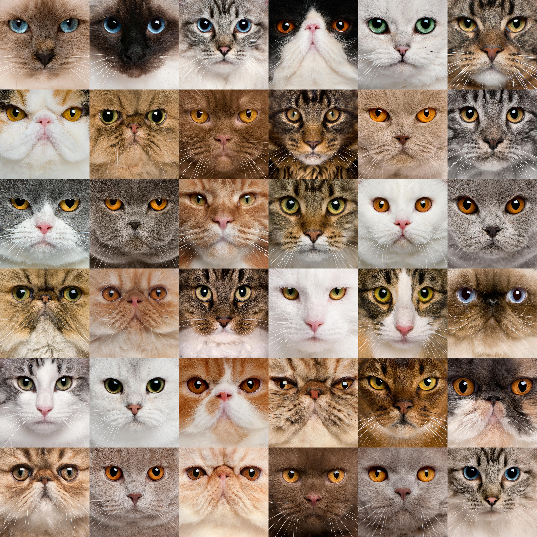 Как кошку сделать красивой фото 657