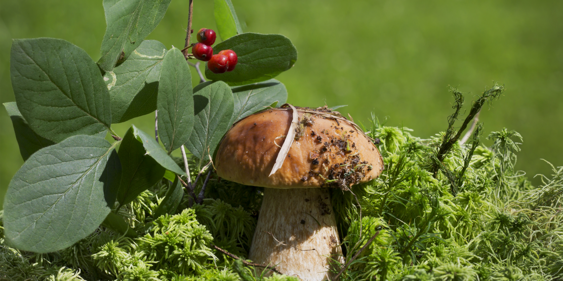 Картинки по запросу грибы в лесу