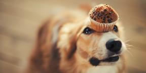 Чем можно, а чем нельзя кормить собак