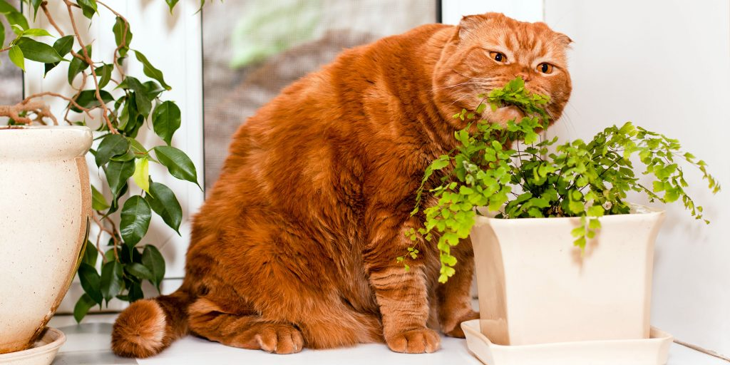 cat disease diagnosis