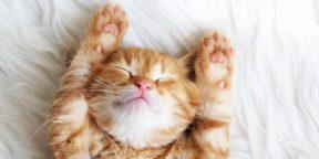 Топ-12 дружелюбных пород кошек