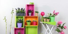 15 комнатных растений, которые сделают воздух в помещении чище