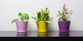 Неприхотливые и эффектные растения для дома и офиса