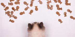 РЕЦЕПТЫ: Рыбное печенье для кошек