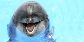 Смеющаяся крыса, хихикающий дельфин: есть ли у животных чувство юмора