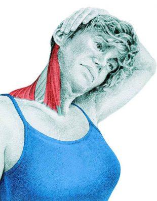 Анатомия стретчинга: растяжка боковых сгибателей при помощи рук