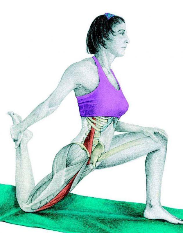 Анатомия стретчинга: растяжка бедра