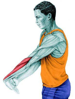 Анатомия стретчинга: растяжка разгибателей предплечья