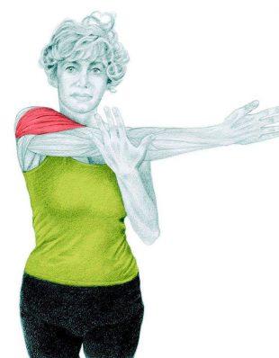 Анатомия стретчинга: боковая растяжка плеча