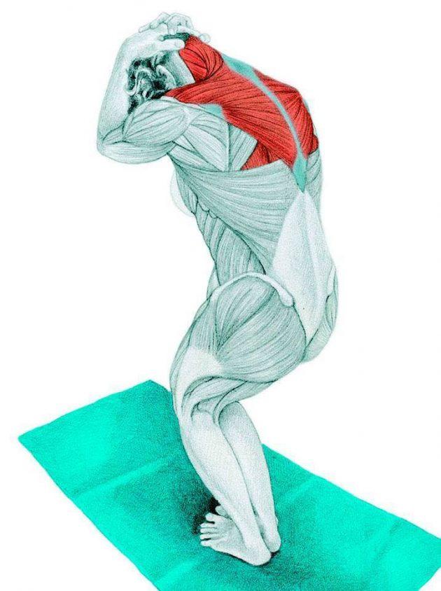 Анатомия стретчинга: растяжка шеи в положении стоя