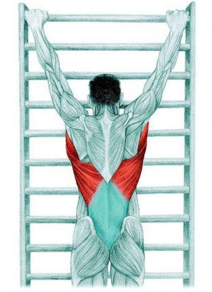 Анатомия стретчинга: растяжка с вытяжением позвоночника