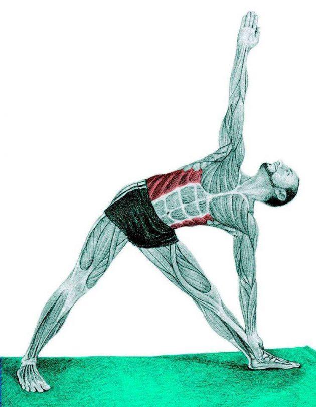 Анатомия стретчинга: поза треугольника