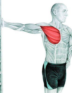 Анатомия стретчинга: растяжка грудных мышц у стены